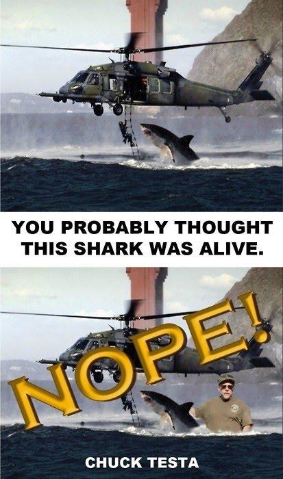 Shark - Nope Chuck Testa