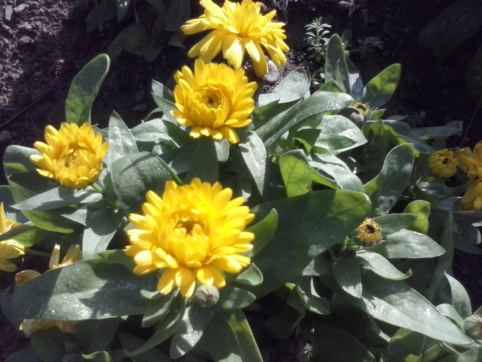 Imagenes Flores De Primavera - Naturaleza, Paisajes Imágenes gratis en Pixabay