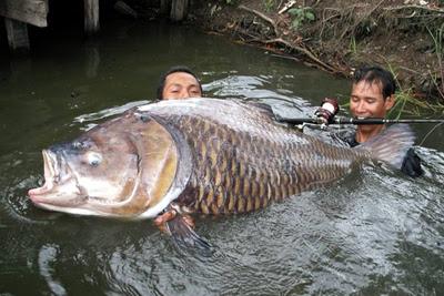 cần câu cá chép