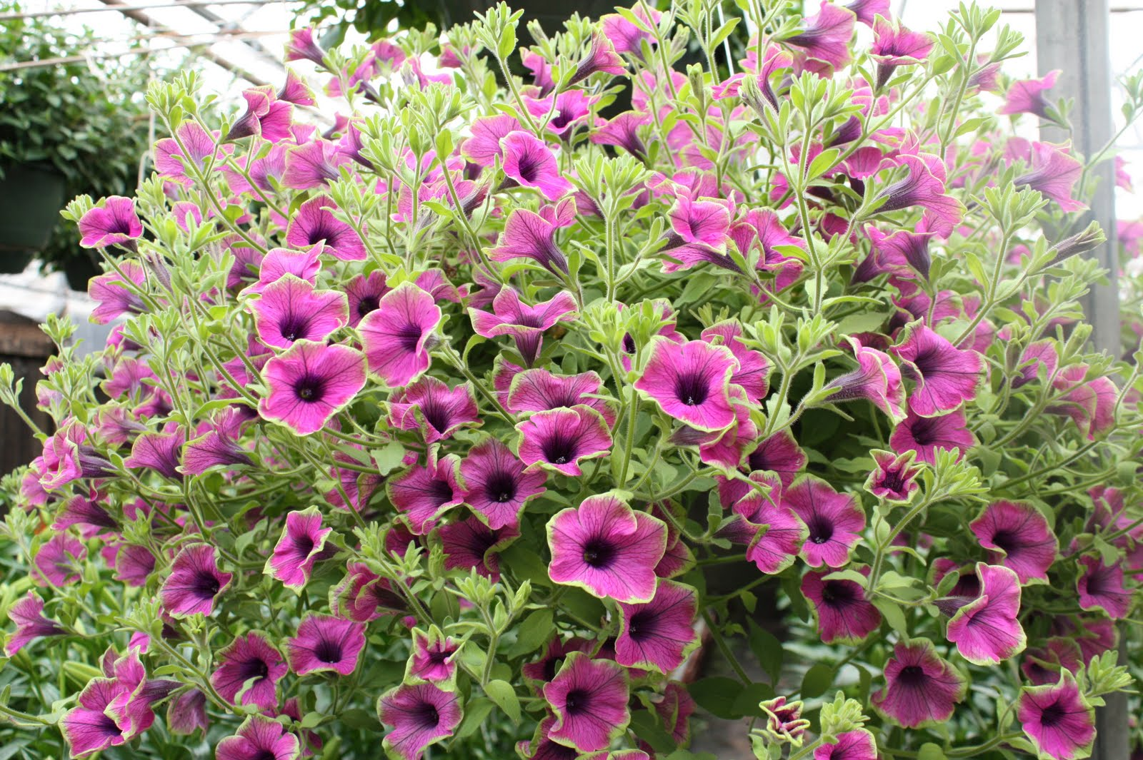 100 Plants That Dont Need Sunlight The Plant Hunter Blog