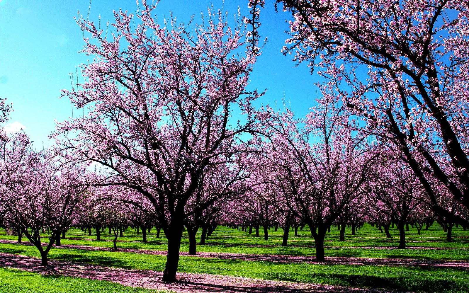 Ese apo hartim për pranverën