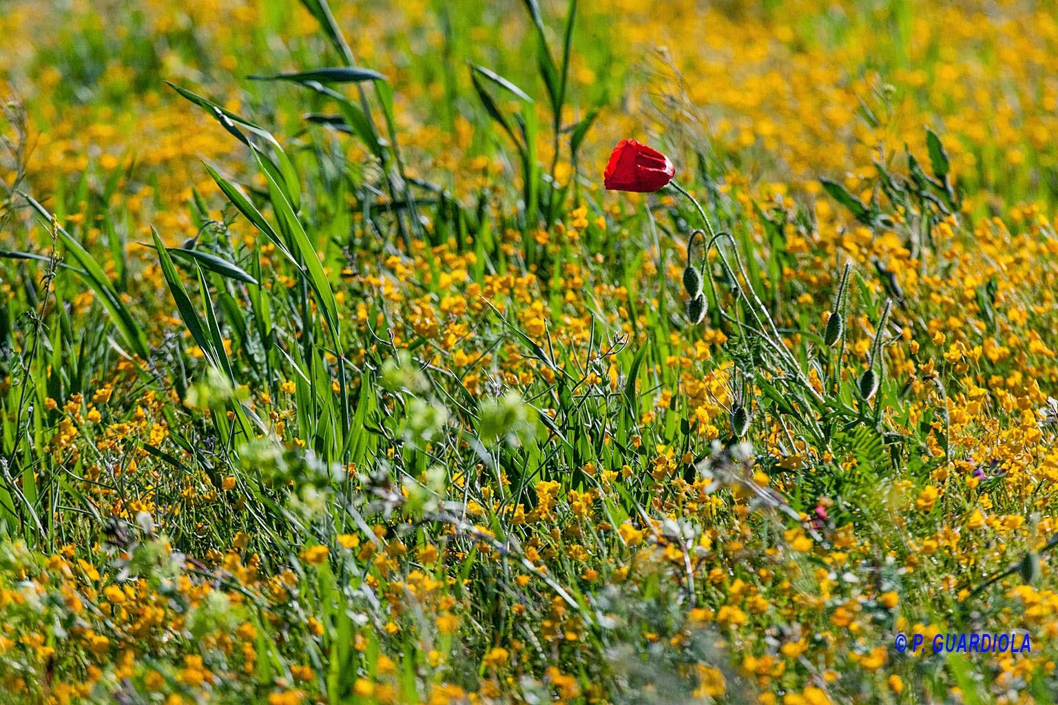 climatología, floración, Jumilla