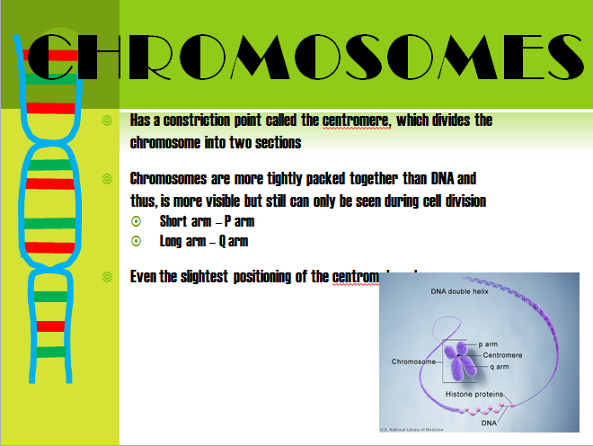 the positioning of chromosomes during cell As in mitosis, the cell grows during g 1 _1 1 start subscript, 1, end subscript phase, copies all of its chromosomes during s phase, and prepares for division during g 2 _2 2 start subscript, 2, end subscript phase.