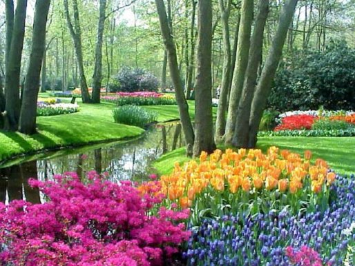 keukenhof beautiful flower garden in holland tour