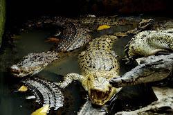 Taman Reptil Terbesar Indonesia Ada di Medan