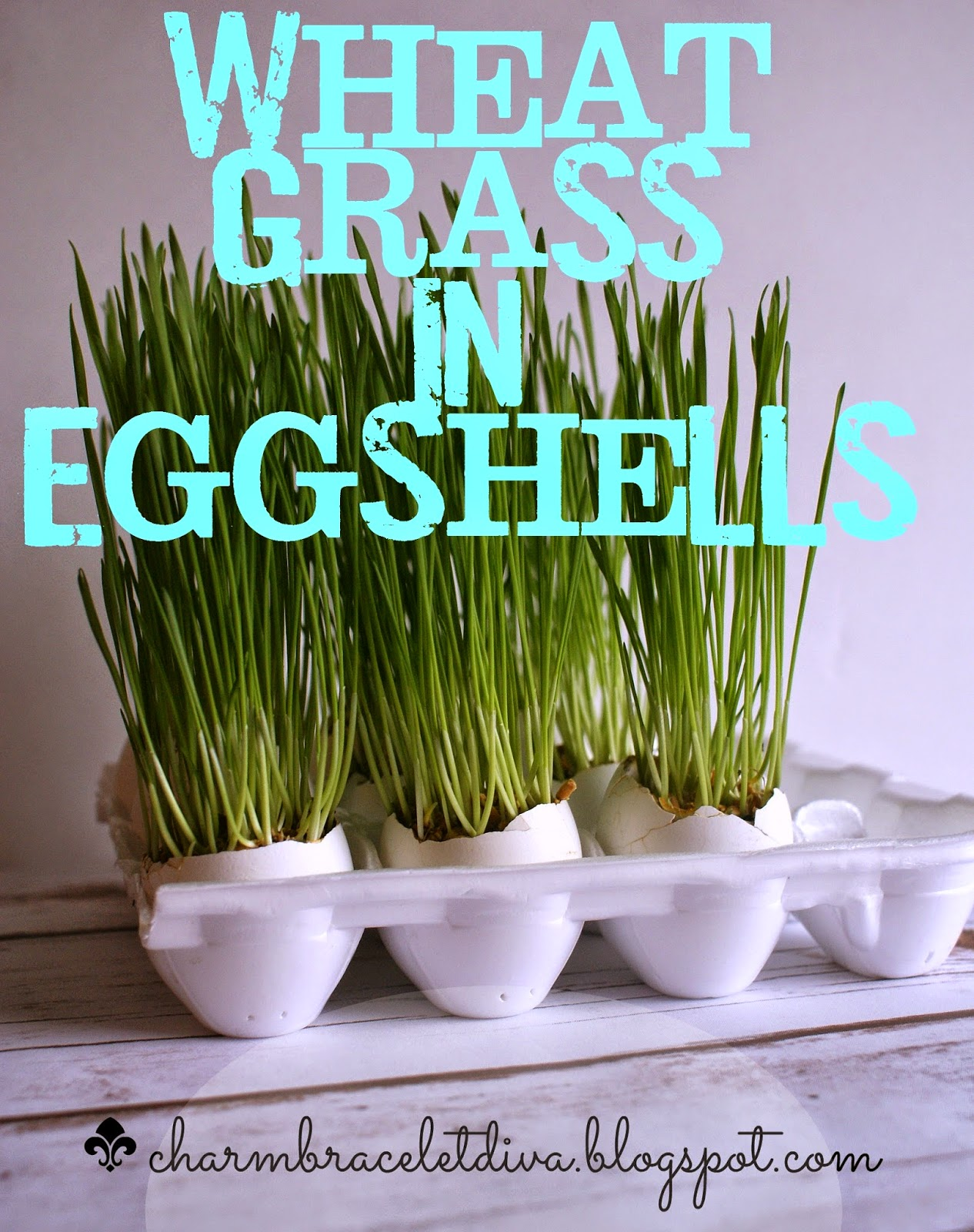 wheat grass growing in egg shells