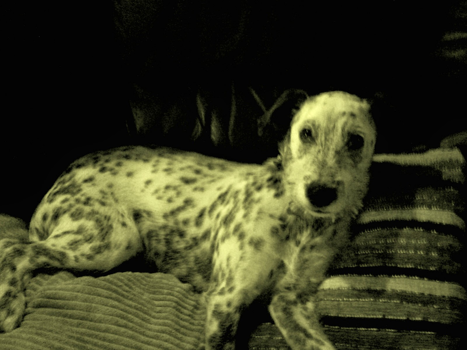 spotty dog first christmas