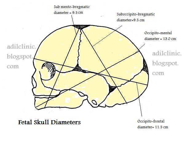 Fetal Skull Anatomy Fetal-skull-diameters-image