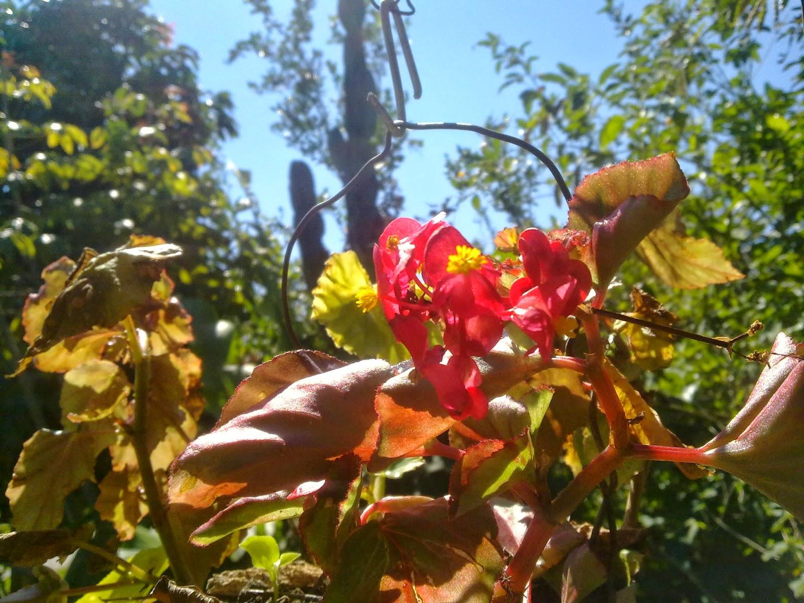 agricultura flores