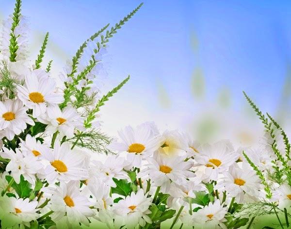 flores no jardim frases : flores no jardim frases:Flores e Frases : Margaridas branca