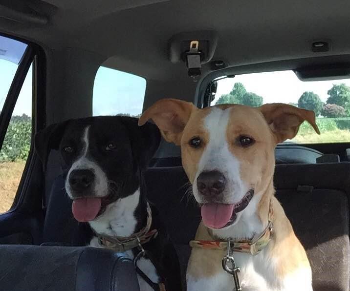 My Blog Dogs