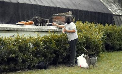 Alimentadora de gatos