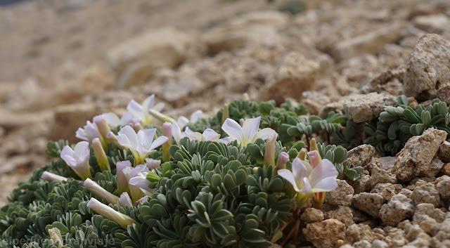 bariloche, flor, acarreo