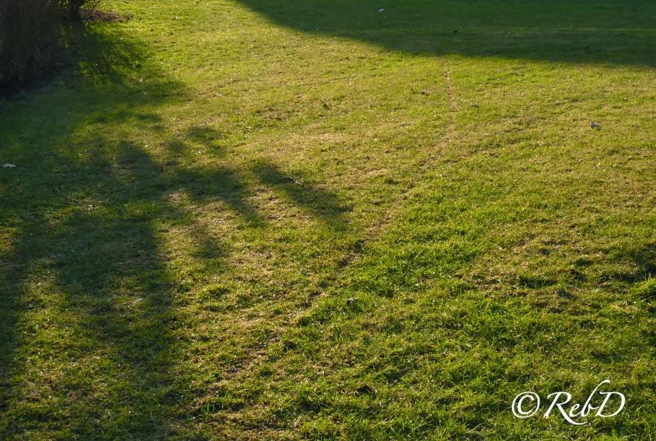 skuggor på gräsmatta. foto: Reb Dutius