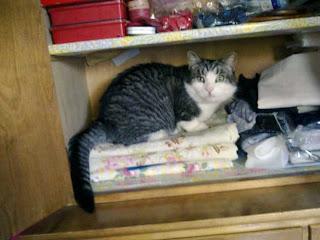 Kissa ompelutarvikekaapissa
