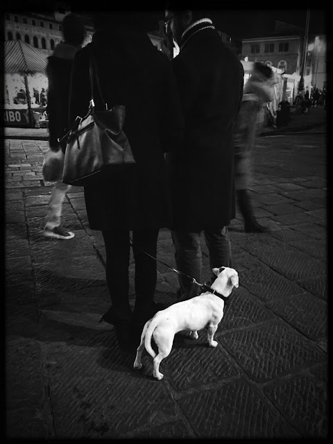 Dogs of Florence, dogs, Florence, Italy, canines, travel