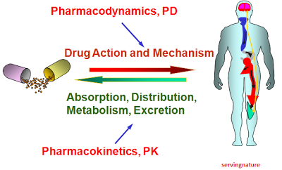 pharmacodynamics defined study of a drug effect biology essay Drugs, dietary changes, and other factors affect inr levels achieved with  † ranges are derived from multiple published clinical studies  response as  determined by inr, at which point heparin may be discontinued   pharmacodynamic mechanisms for drug interactions with coumadin are  synergism  risk summary.
