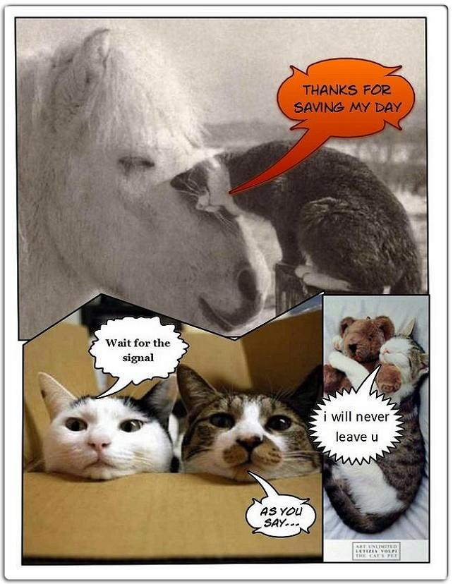 horse-cat-funny-pictures-cute-animals-photos-win.jpg