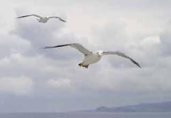 El partido popular eligió como símbolo a la gaviota, buscando en él, el símbolo de libertad,