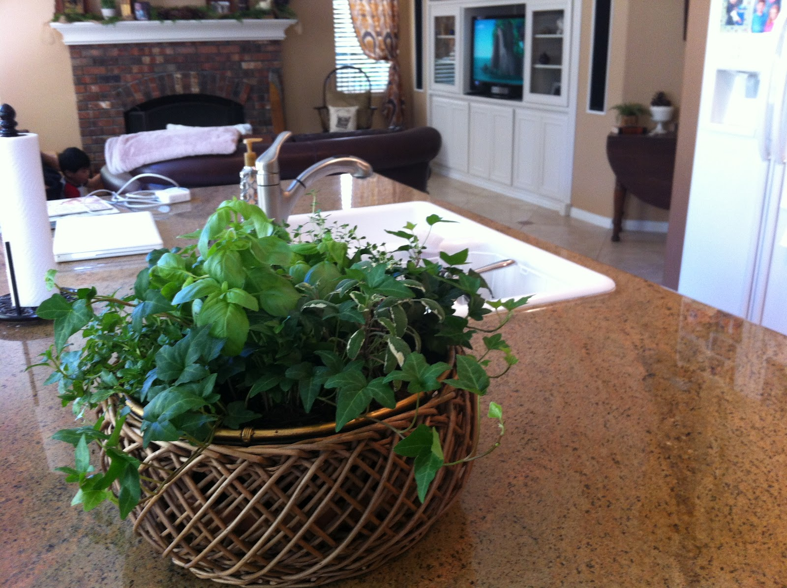 Nothing but blue skies indoor herb container garden for Design indoor herb garden