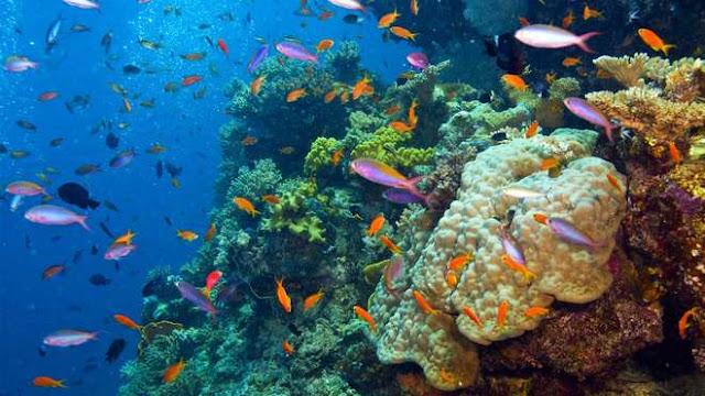 Em 40 anos, a biodiversidade marinha do planeta foi reduzida à metade