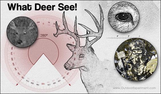 What Deer See!