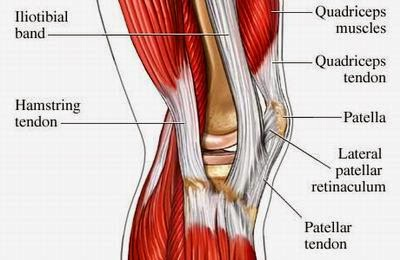 Tom's Physiotherapy Blog: Knee Injuries