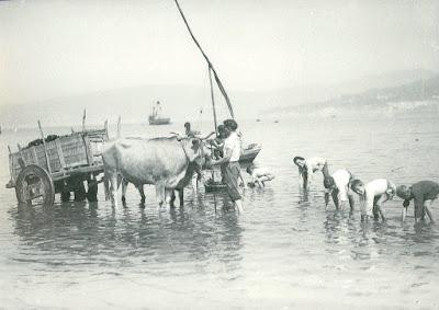 Recogida de marisco, Vigo 1947