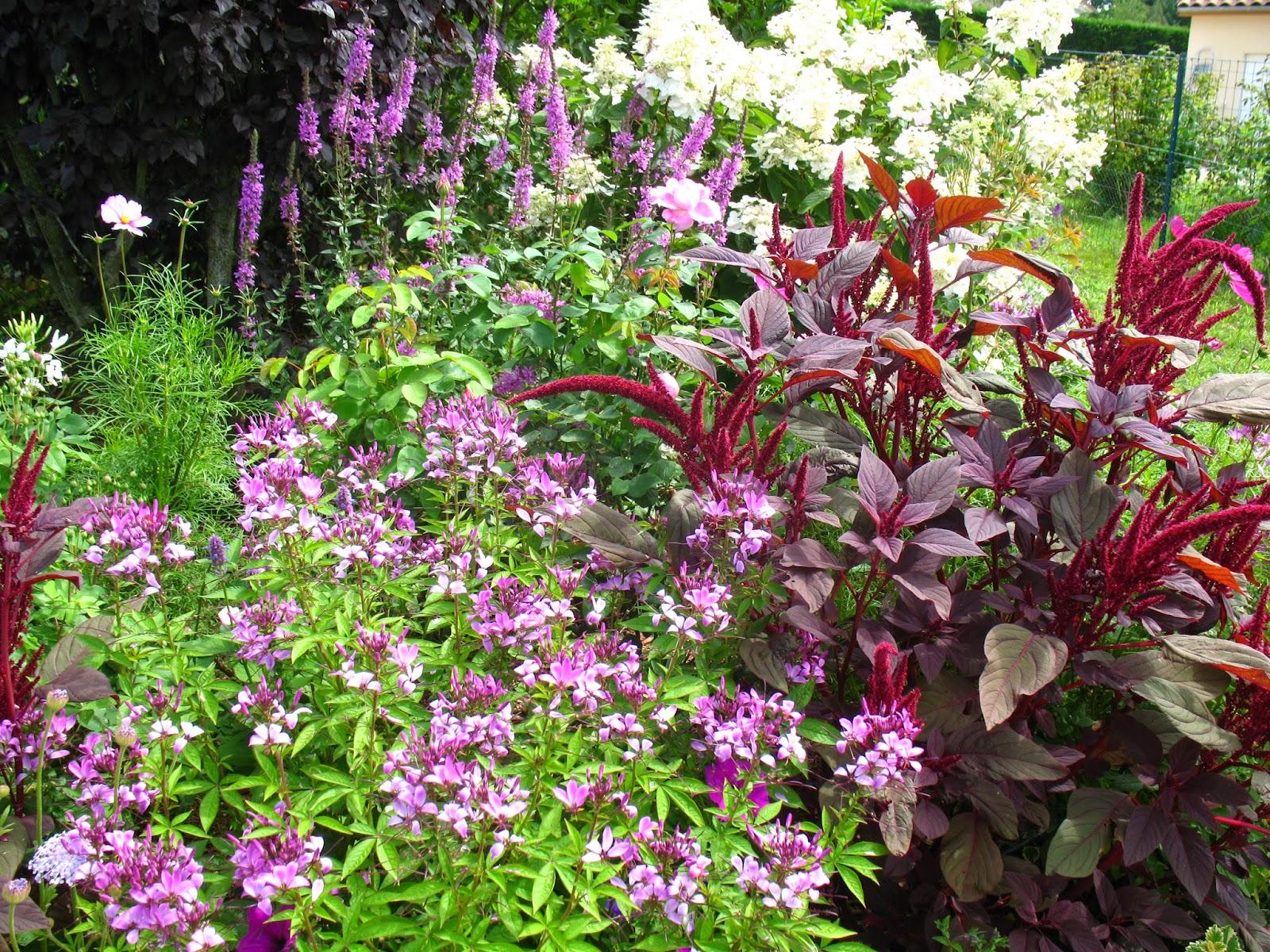 Roses du jardin ch neland cl ome boutures semis - Bouture de l hibiscus de jardin ...