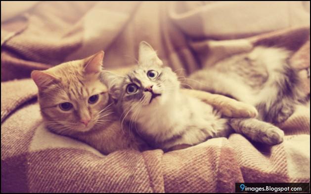 Cat, couple, hug, cute, bed