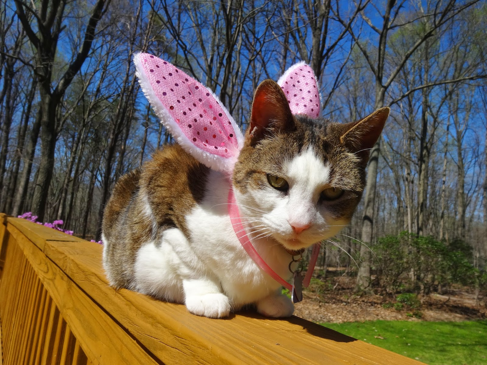 funny easter cat photos featuring snickers the cat