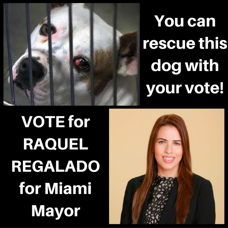 Vote Aug 30 for Raquel Regalado