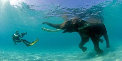 Undiscovered Indian Treasures: Andaman Island's Rajan ...