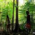 Ketika Hutan Primer di Indonesia Sudah Lama Tidak 'Perawan' dan Terus Menyusut Dengan Cepat, Kita Masih Memiliki Harapan Pada Hutan Mangrove