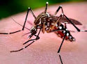 Pesquisadores baianos descobrem vírus causador de 'doença misteriosa