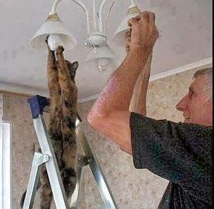Imagenes Graciosas de Animales, Gato Electricista