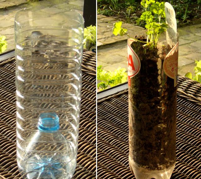 Plantando em garrafas plásticas