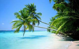 Beautiful Beach Sand Palm Trees Wallpaper