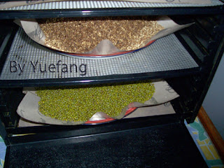 drying_mung_beans_and_coriander_seed_with_excalibur_dehydrator