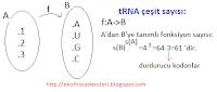 tRNA çeşit sayısı