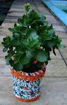 7 Cachepots e suas plantinhas