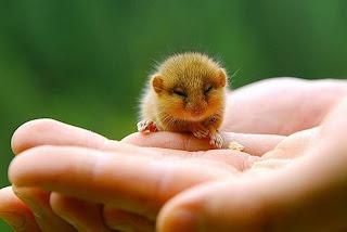 Fotografias de bebes animales