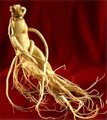 ginseng, tanaman obat, tanaman ginseng, akar ginseng, pohon ginseng