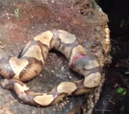 Decapitated Snake Biting Its Own Body