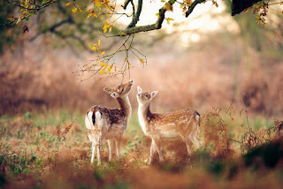 Unsees Rare Photos of Deers