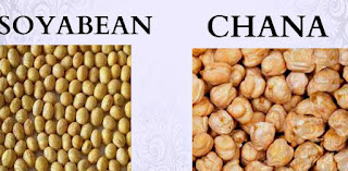 NCDEX Soyabean Today