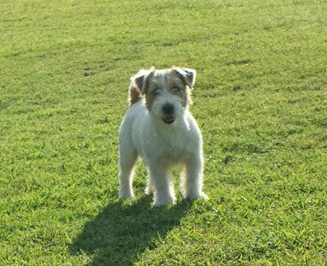 Dakota de Jim JRT