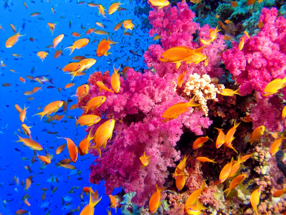 http://theconversation.com/study-vindicates-the-benefits-of-no-fishing-zones-on-the-great-barrier-reef-39366