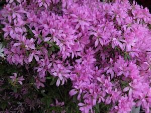 中古 マンション 東京 Blog の花