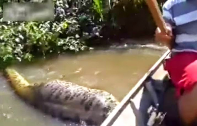 Βραζιλιάνος έπιασε σε ποτάμι το μεγαλύτερο  anaconda που βρέθηκε ποτέ